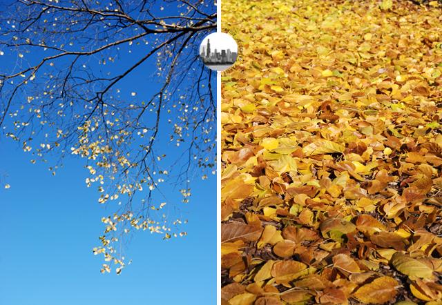 foglie gialle autunno