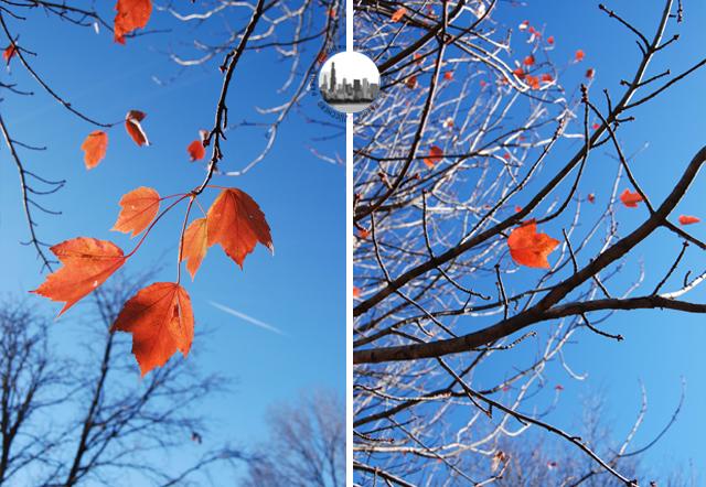 foglie rosse autunno